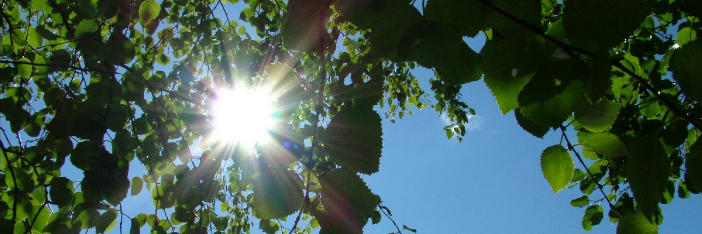 Sunlight Slider Image